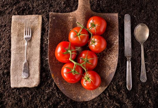 photodune-9347270-tomatoes-xs-1